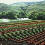 بررسی استاندارد حسابداری شماره ۲۶(کشاورزی) از تئوری تا عمل